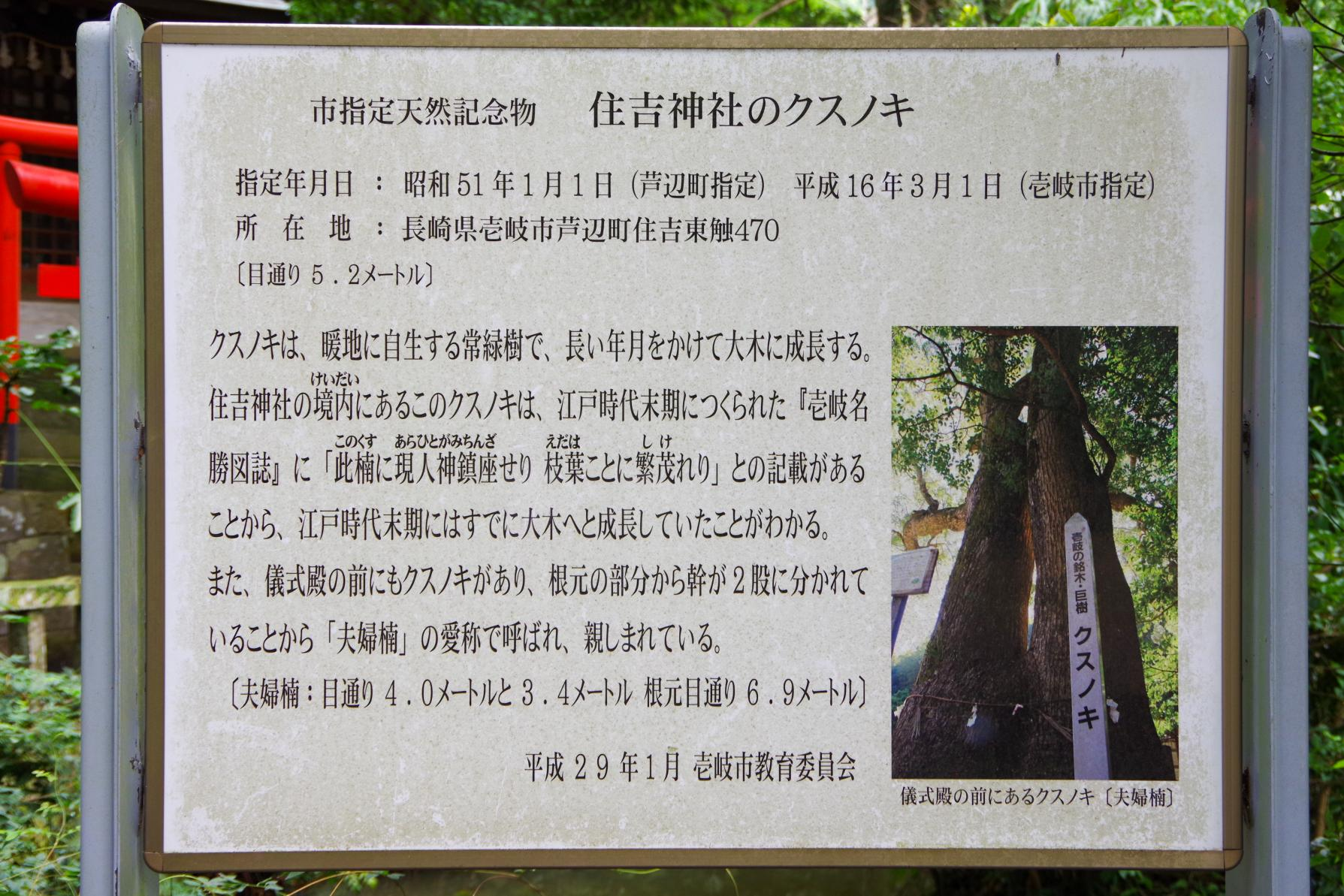 Sumiyoshi Shrine with a Fufu Kusu (Married Couple camphor Tree) That Makes Your Wishes Come True-5