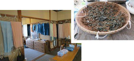Aiakane Kobo : The Traditional Indigo Dyeing Experience-2