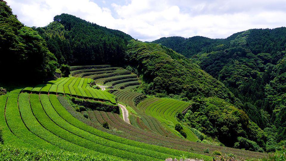 Tea and Pottery – Higashi Sonogi and Hasami-0