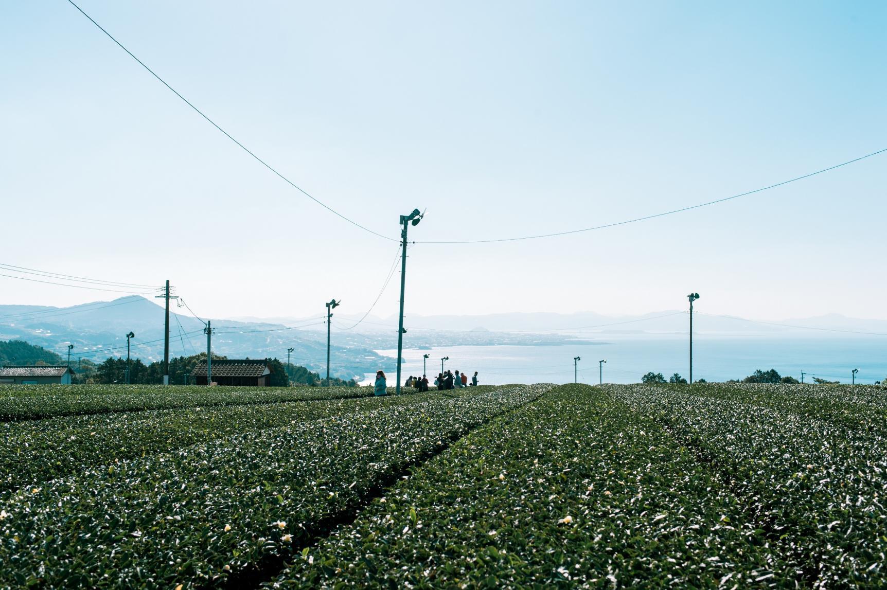 The Sea and the Tea Gardens-3