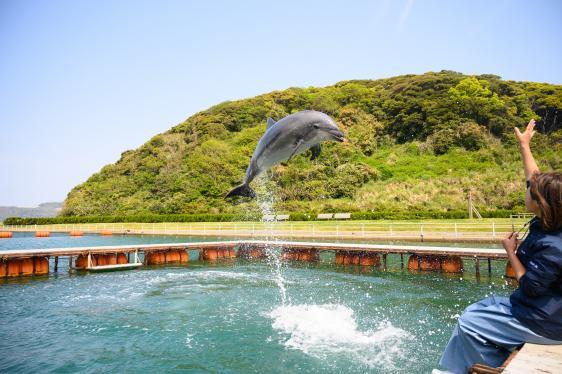 壹岐海豚公园-0