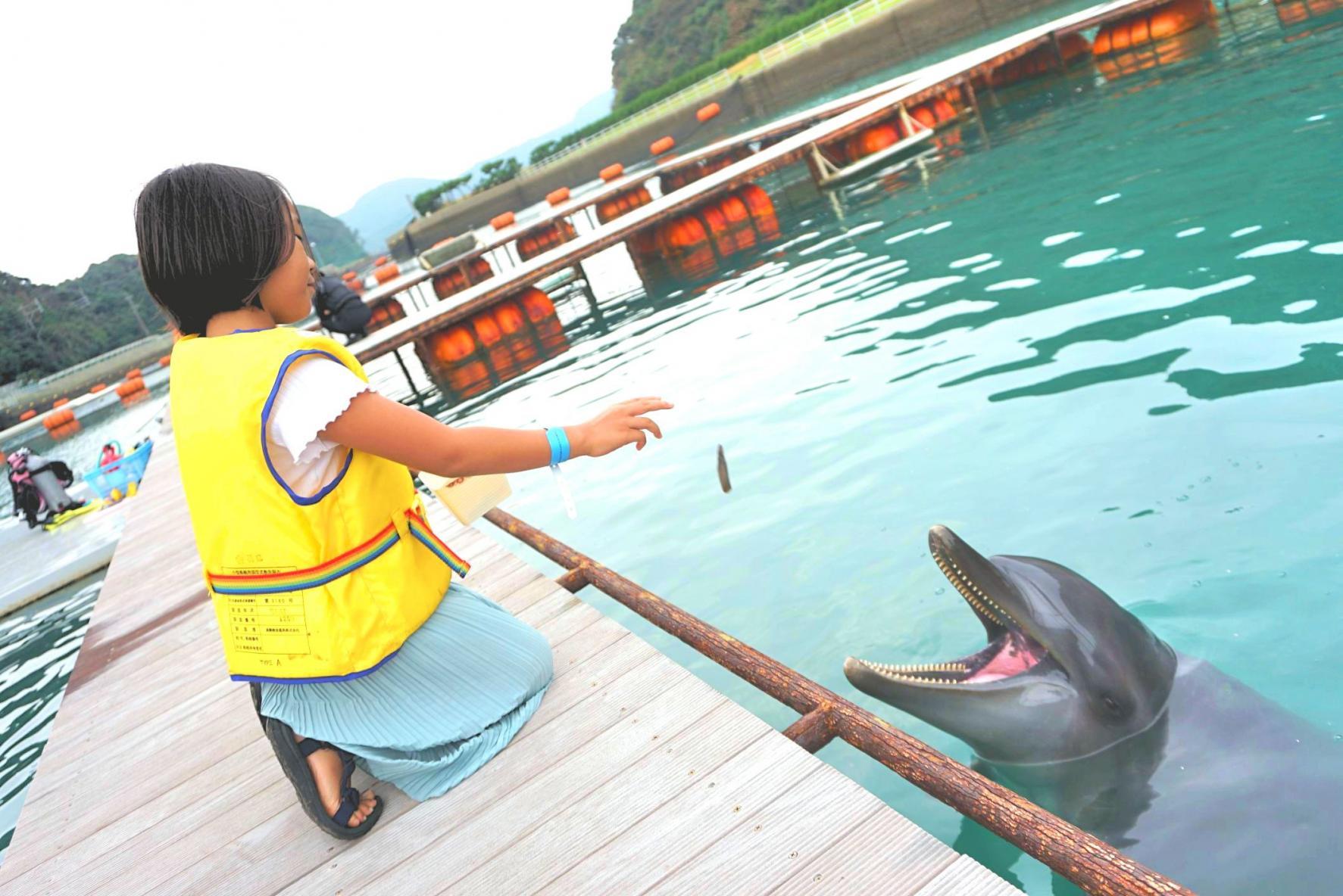 壹岐海豚公园-2