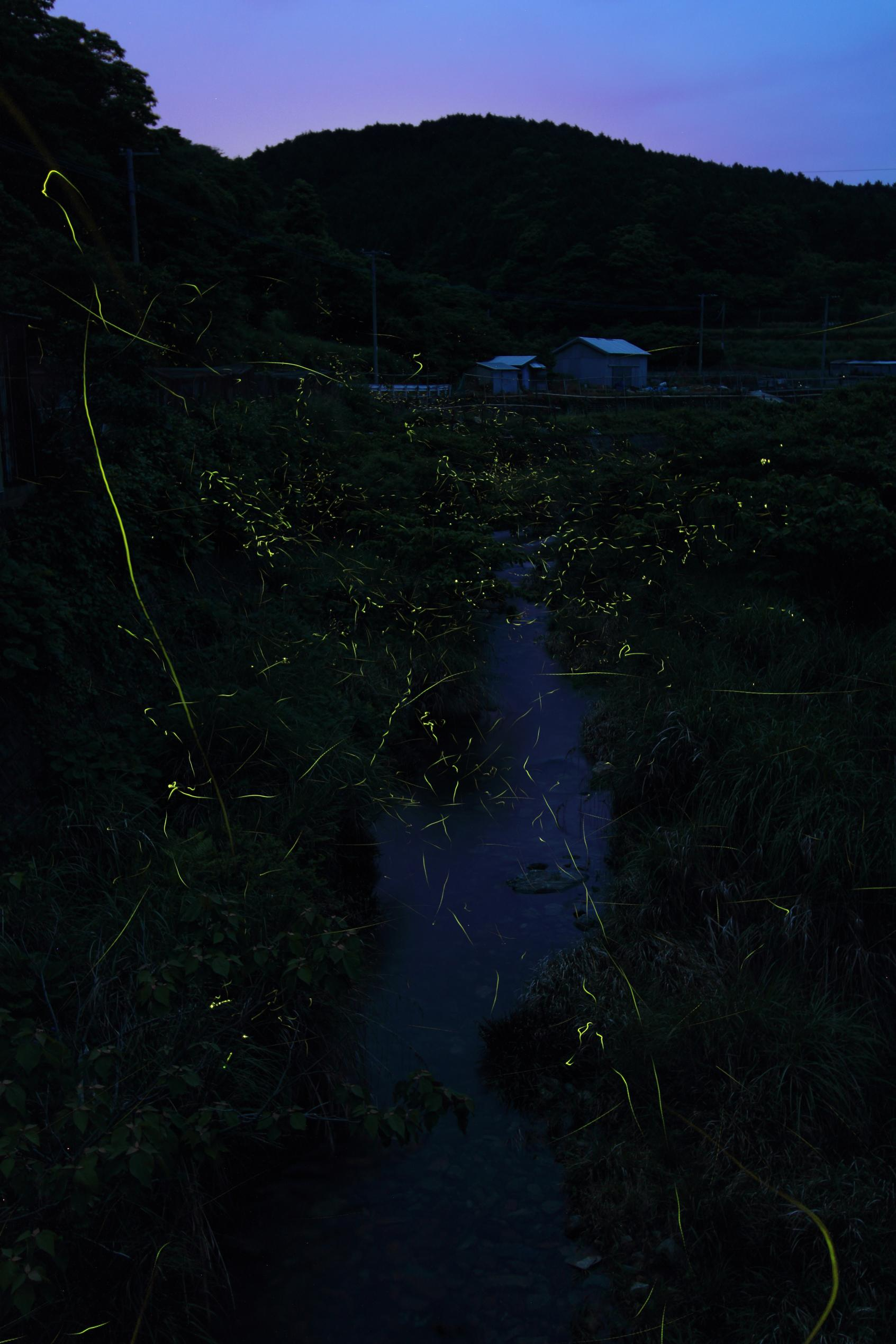 Firefly Festival in Shinkamigoto-2