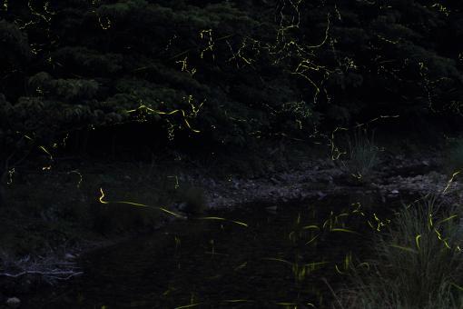 Firefly Festival in Shinkamigoto-1