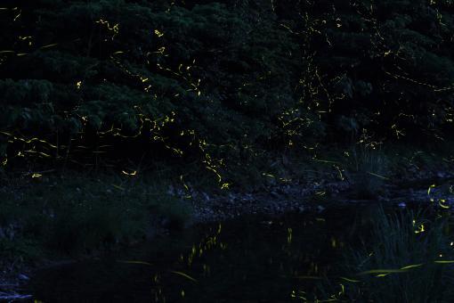 Firefly Festival in Shinkamigoto-0
