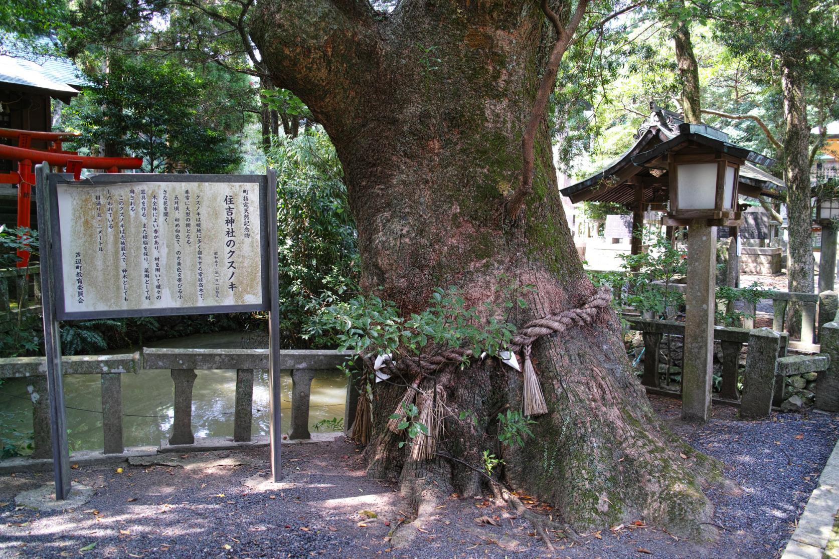 Sumiyoshi Shrine-3