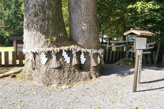 Sumiyoshi Shrine-5