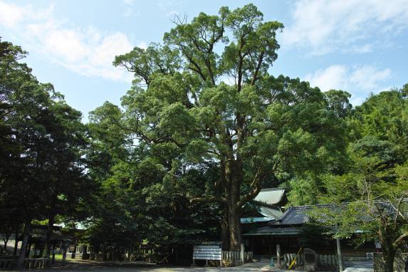 Sumiyoshi Shrine-2