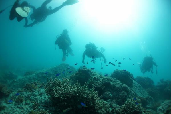 上五島の海中散歩(体験ダイビング)-0