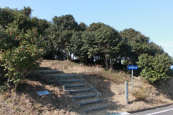 津和崎つばき公園-3