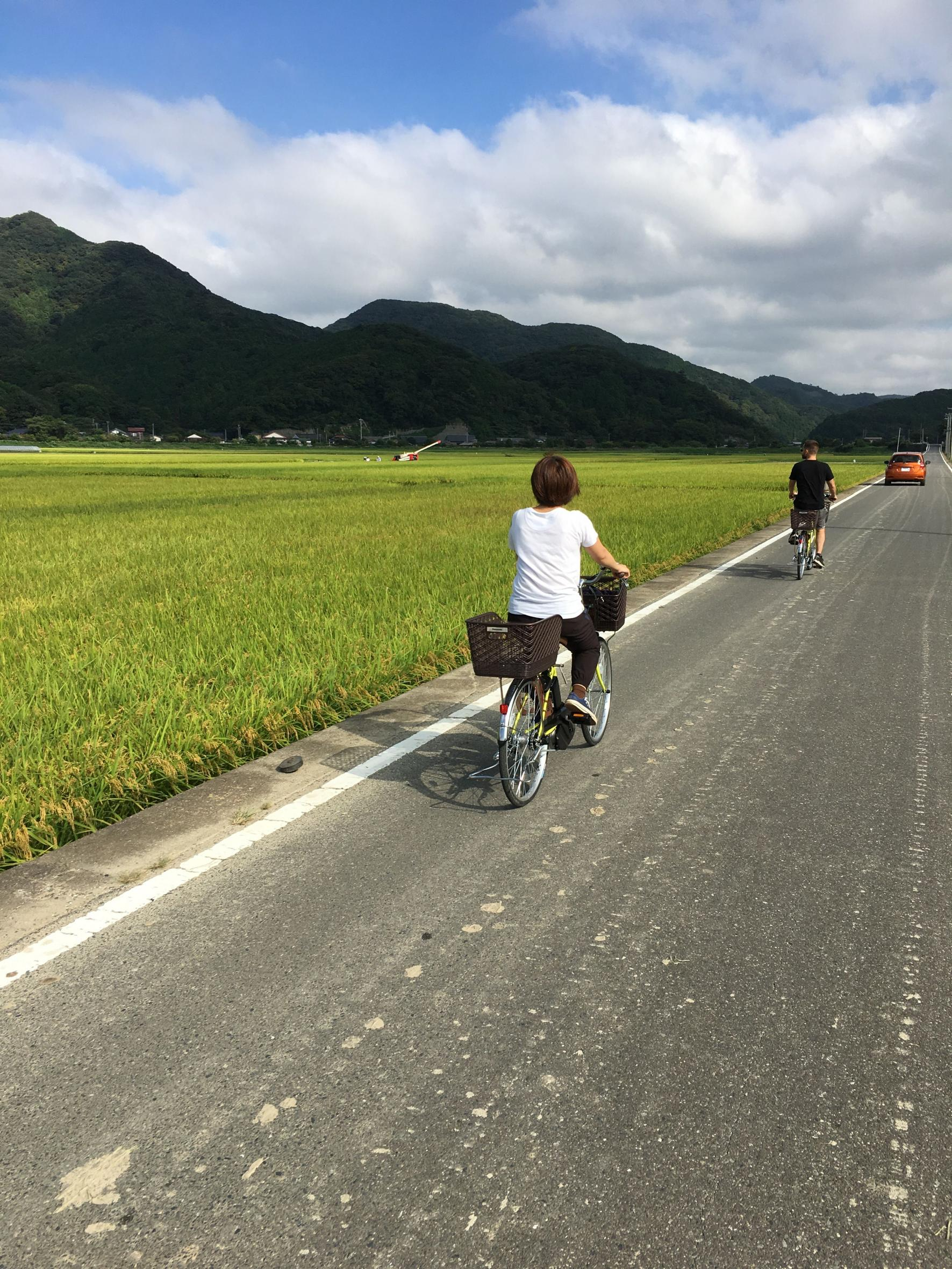 対馬の紅茶製造とヤマネコの里サイクリング-2