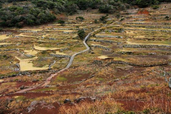Nozaki Island-2