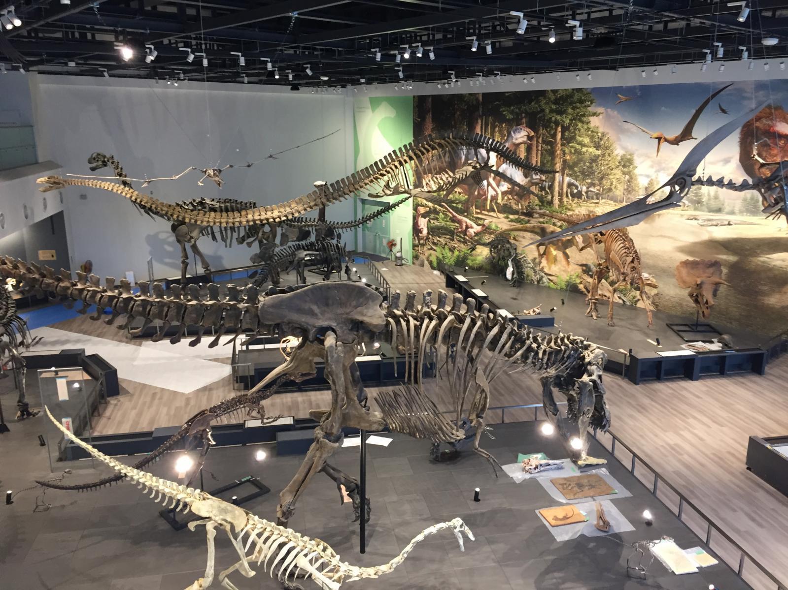 長崎市恐竜博物館-2
