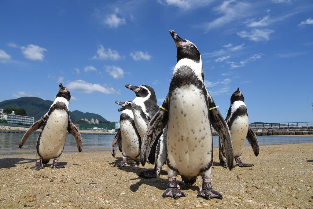 長崎企鵝水族館-5