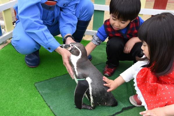 長崎ペンギン水族館-4