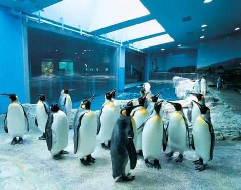 長崎ペンギン水族館-1