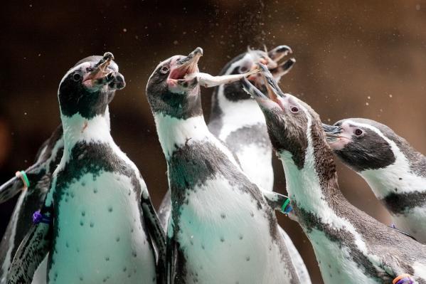 長崎企鵝水族館-8
