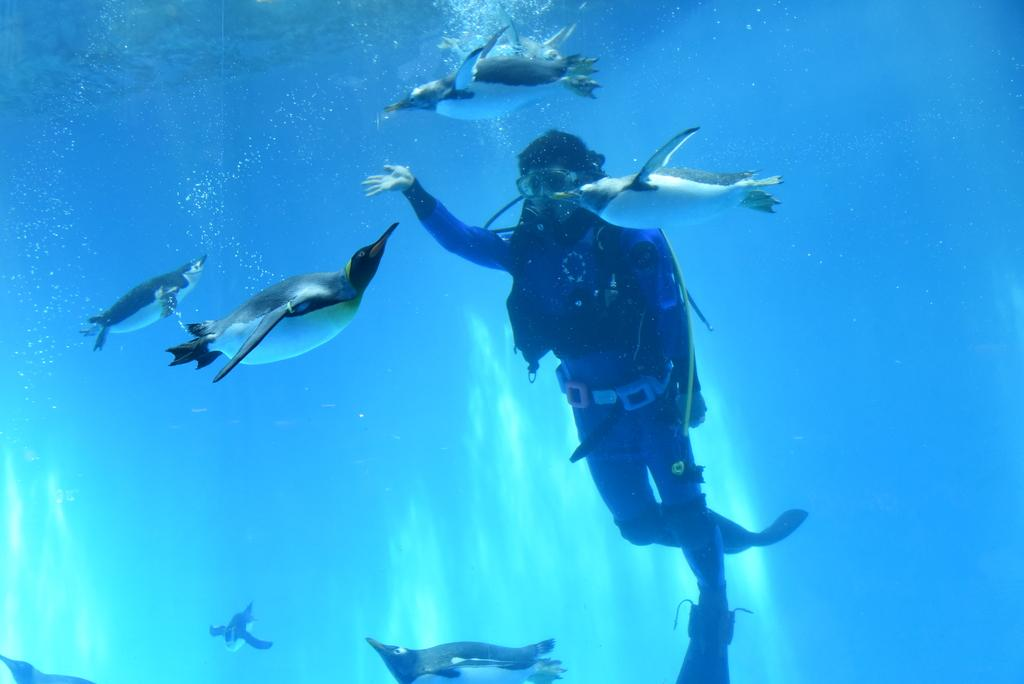 長崎ペンギン水族館-3