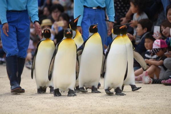 長崎企鵝水族館-0