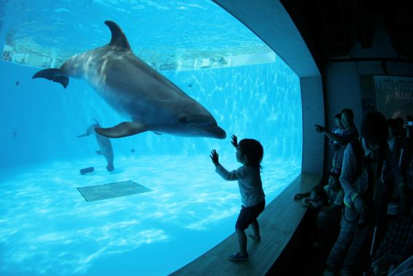九十九岛珍珠海洋游览区-1
