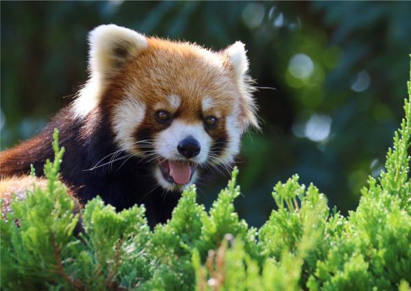 九十九島動植物園森きらら-1