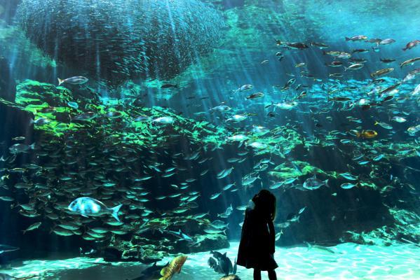 西海国立公園 九十九島水族館(海きらら)-0