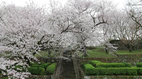 舊円融寺庭園 (國指定名勝)-0