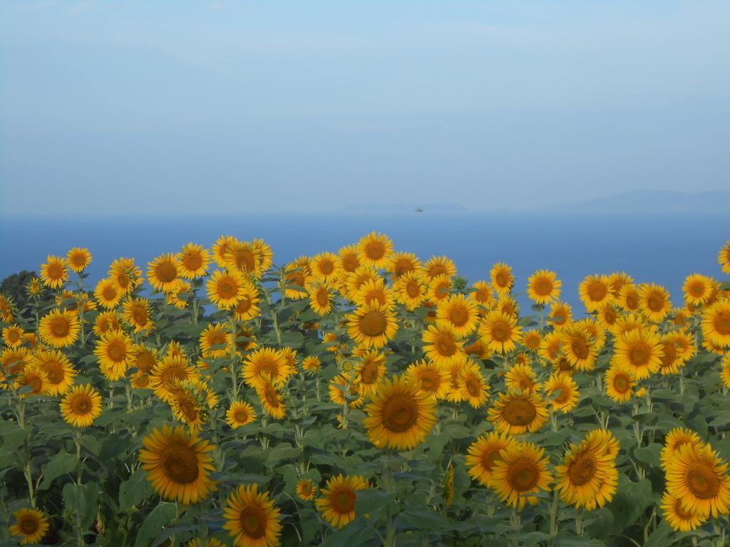 南島原ひまわり畑-3