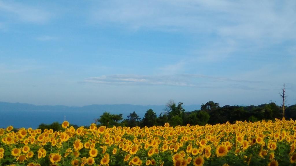 南島原ひまわり畑-7