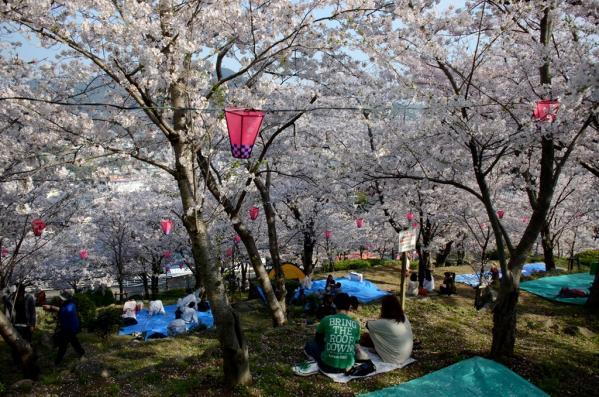 【2021年中止】立山公園さくらまつり-5