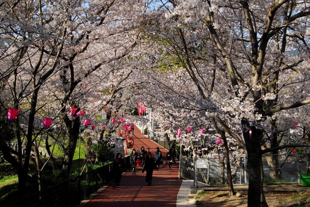 【2021年中止】風頭公園桜まつり-1
