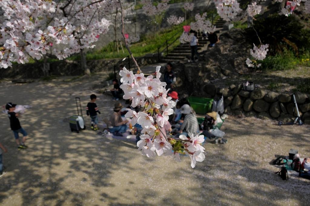 【2021年中止】風頭公園桜まつり-3