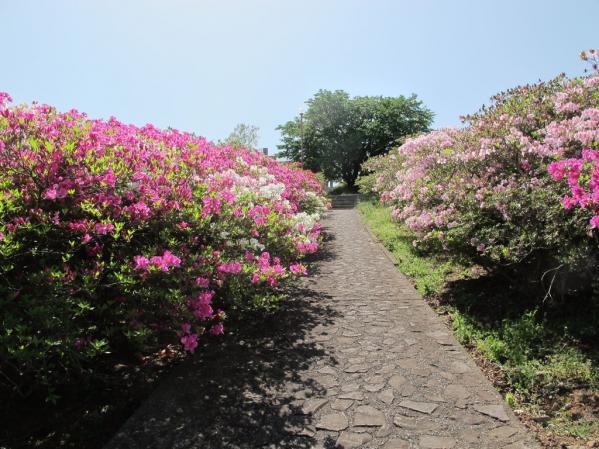 Mount Inasa Azalea Festival-3