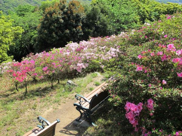 Mount Inasa Azalea Festival-5
