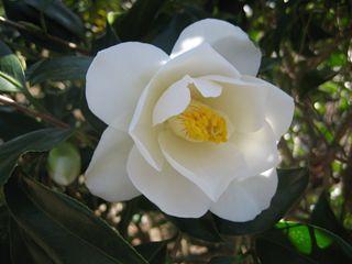 Goto Camellia Forest Park-4