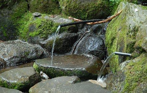 多良岳・修多羅の森 -1