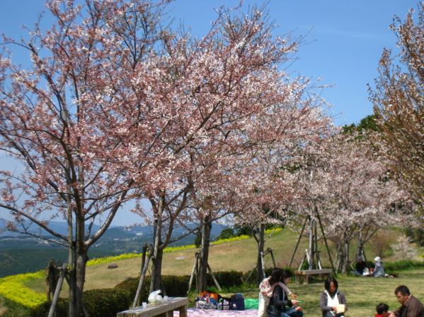 Omura Flower Festival-4