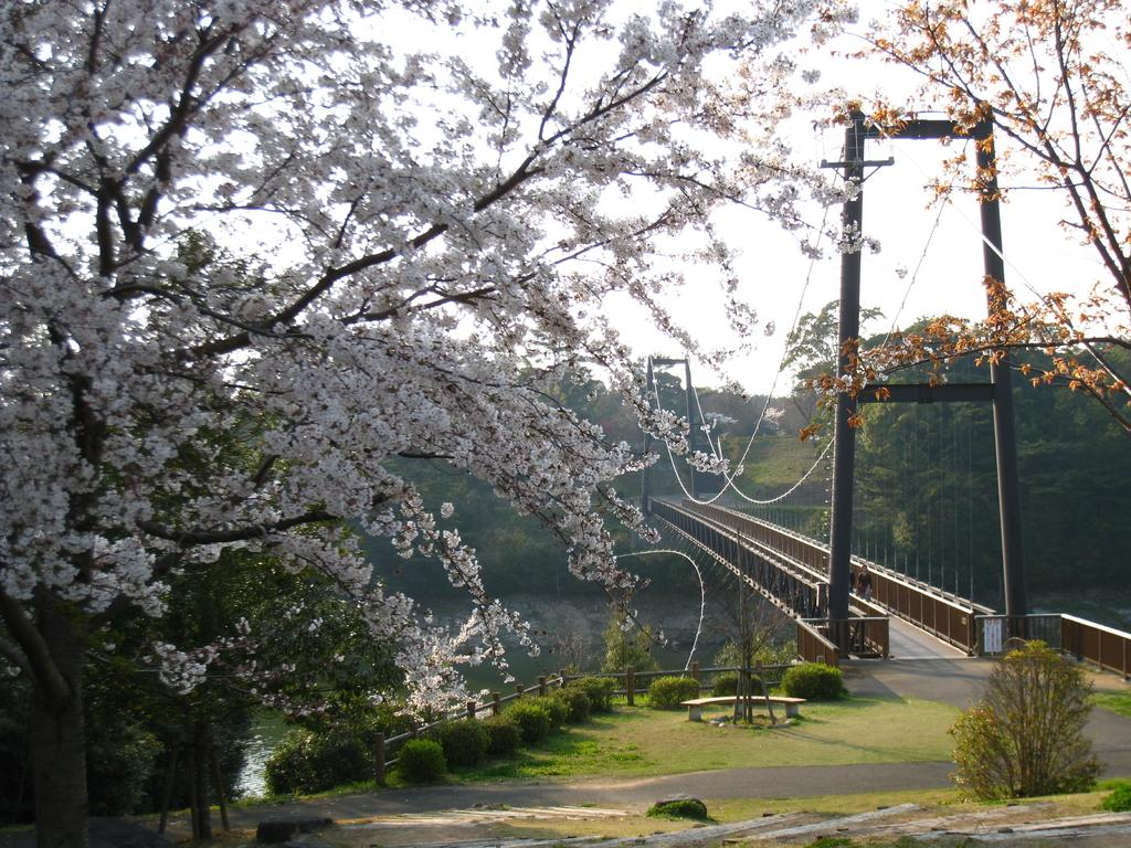 Omura Flower Festival-3