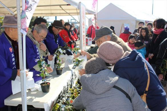 Goto Camellia Festival-2