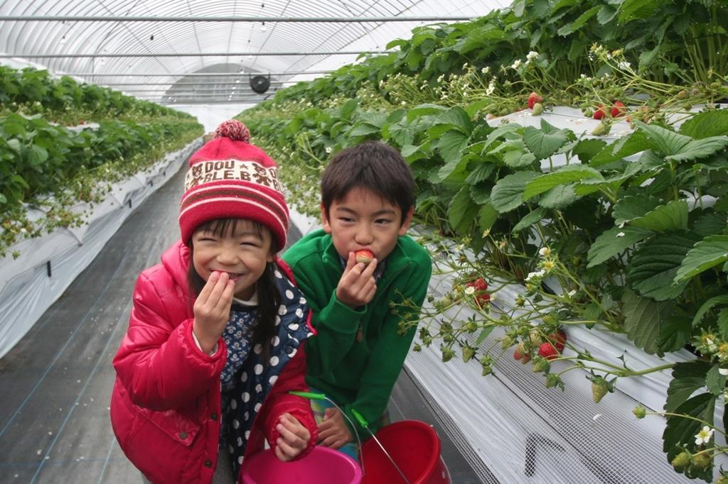 Ichigo no Mori Farm (Strawberry Picking Farm)-1