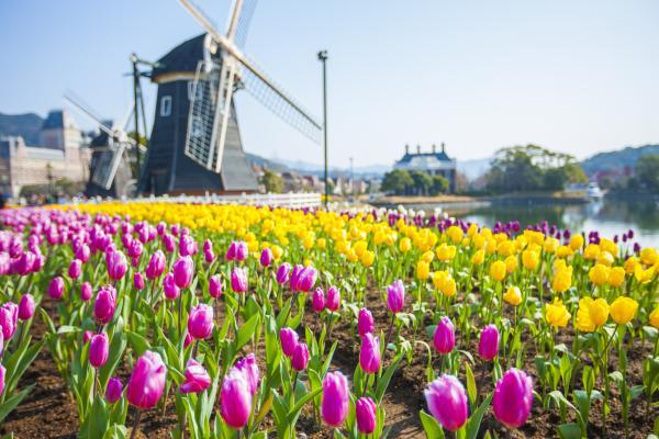 The Huis Ten Bosch Tulip Festival-7