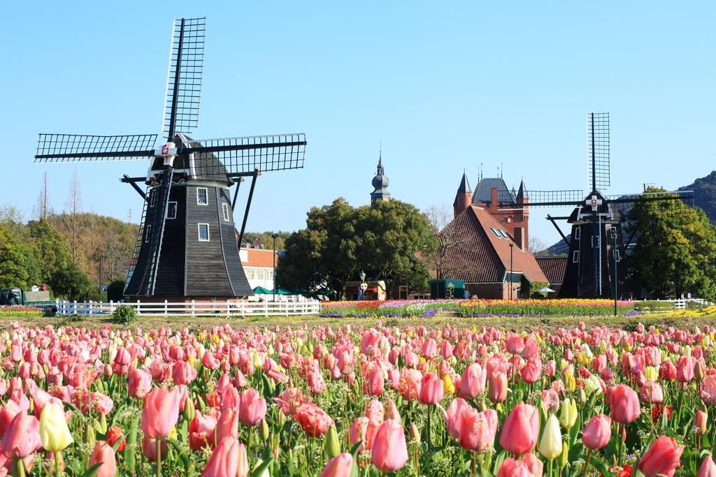 The Huis Ten Bosch Tulip Festival-1