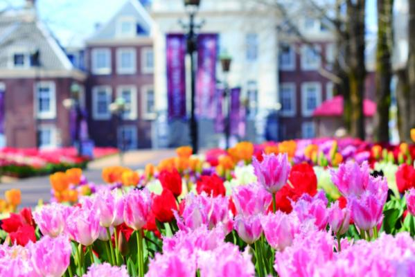 The Huis Ten Bosch Tulip Festival-2