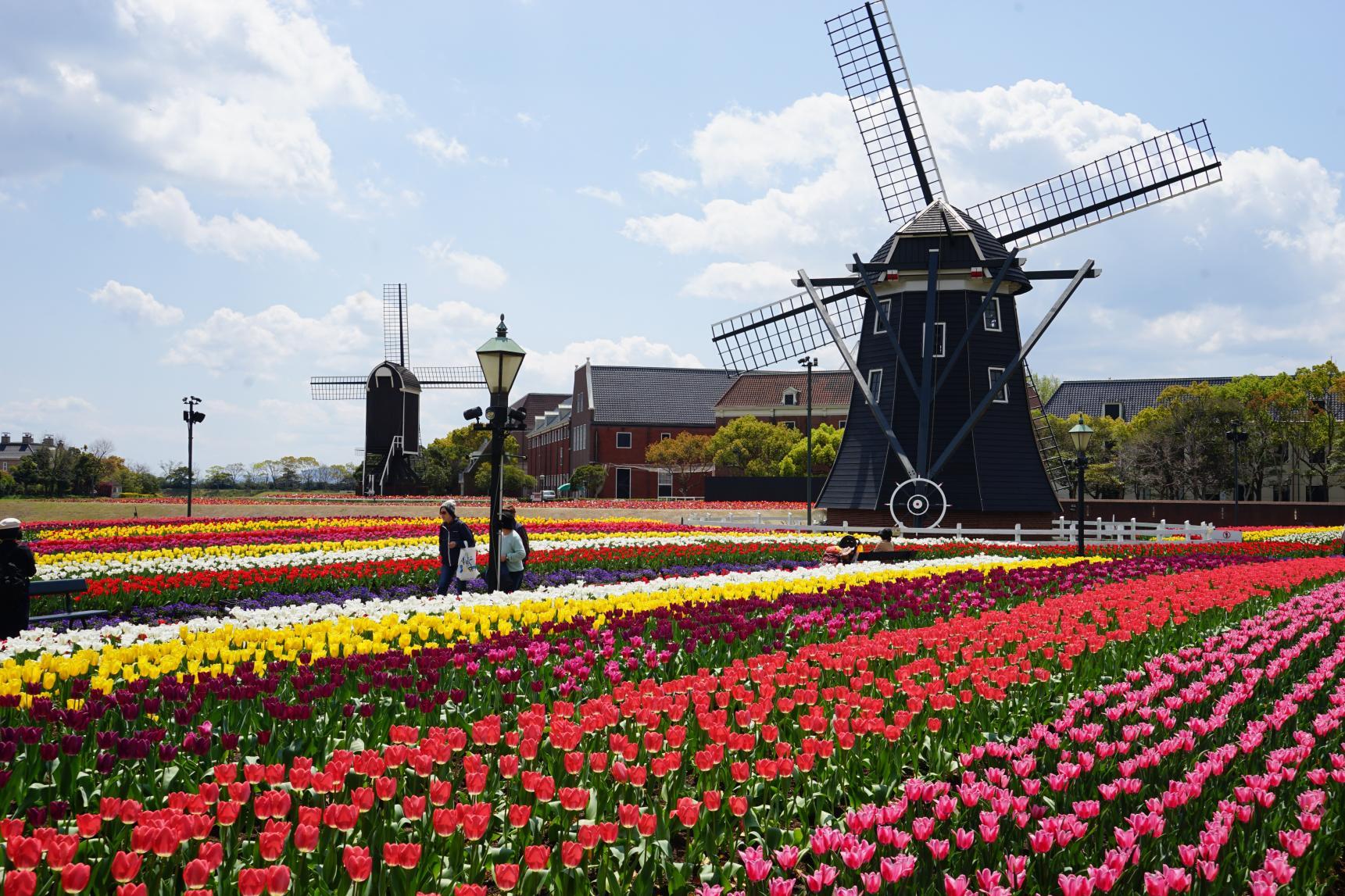 The Huis Ten Bosch Tulip Festival-8