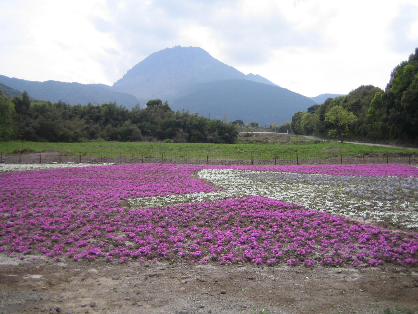 しまばら火張山花公園-6