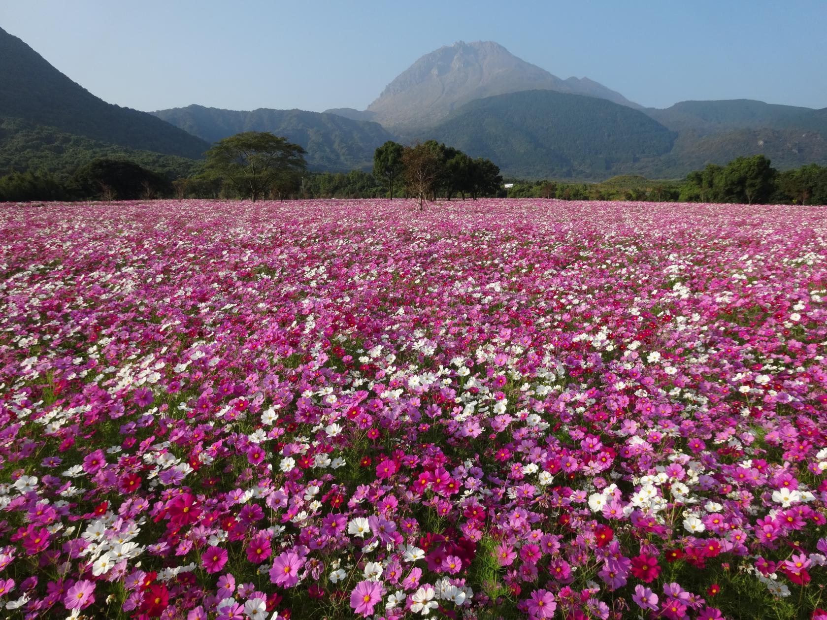 しまばら火張山花公園-0