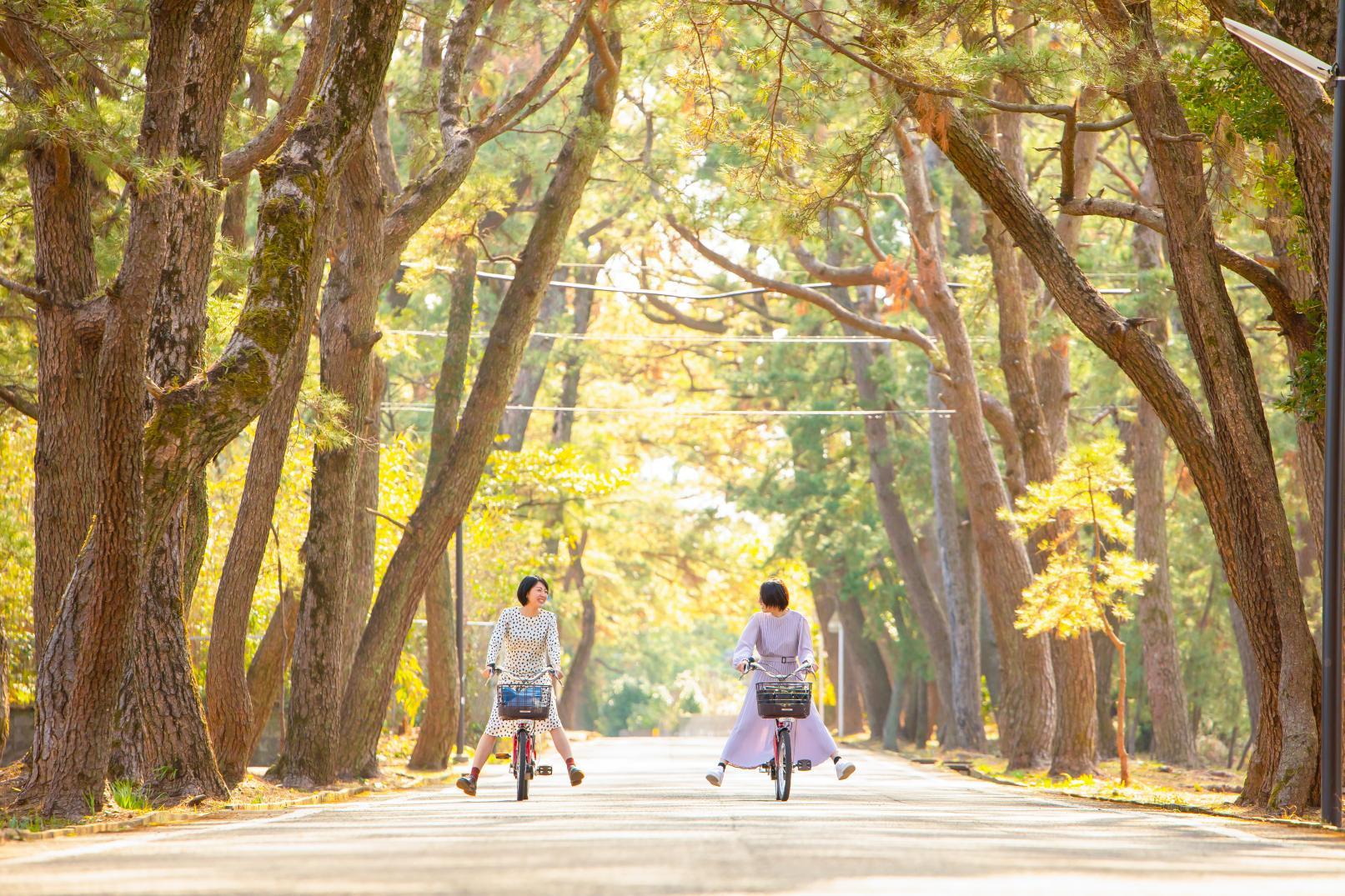 Avenue of Pines - Hime no Matsubara-1