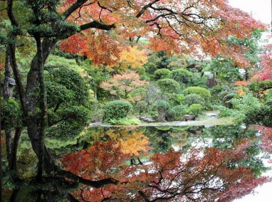 Shindenan - Autumn Public Viewing-1