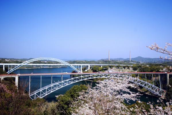【お花見情報】西海橋のソメイヨシノ-0