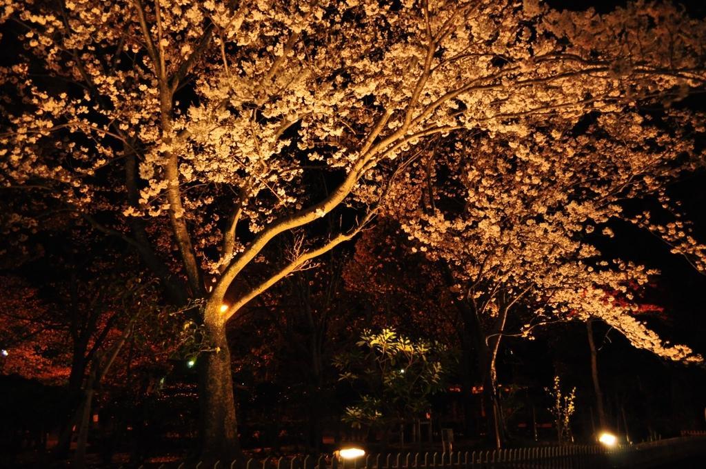 【お花見情報】佐世保公園の桜-0